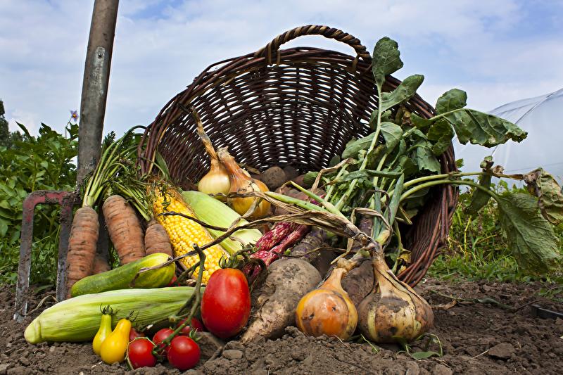 Nachfrage nach Bio-Lebensmitteln mit knapp 2,4 Milliarden Umsatz auf neuem Rekordhoch